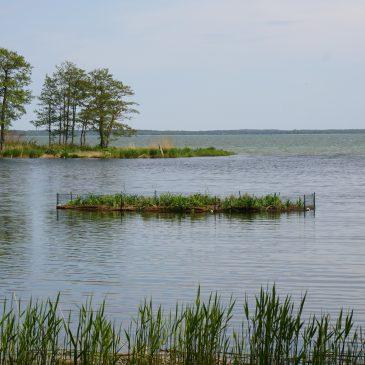 Floating islands provide a nesting habitat for birds